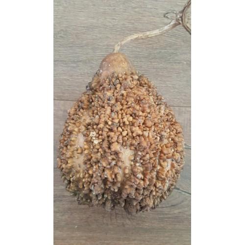 Leraka Gourd
