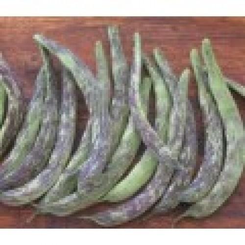 Albenga Bush Beans