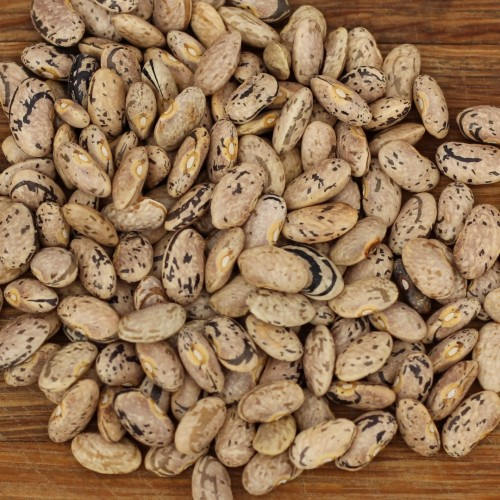 Australian Rattlesnake Beans