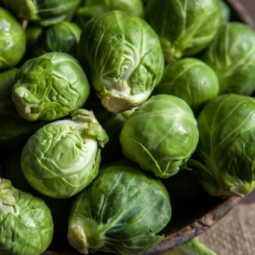 Brussels Sprouts Catskill
