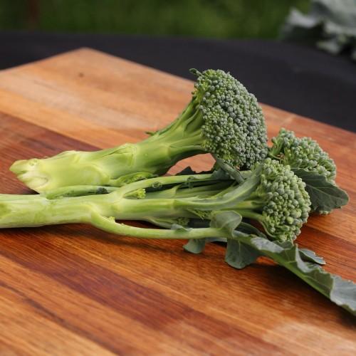 De Cicco Broccoli