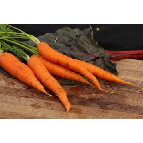 Imperator Carrot