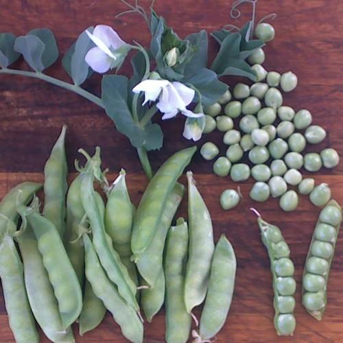 Greenfeast Peas