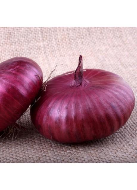Onion Cipollini Red