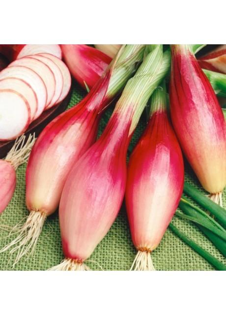 Red Torpedo Onion