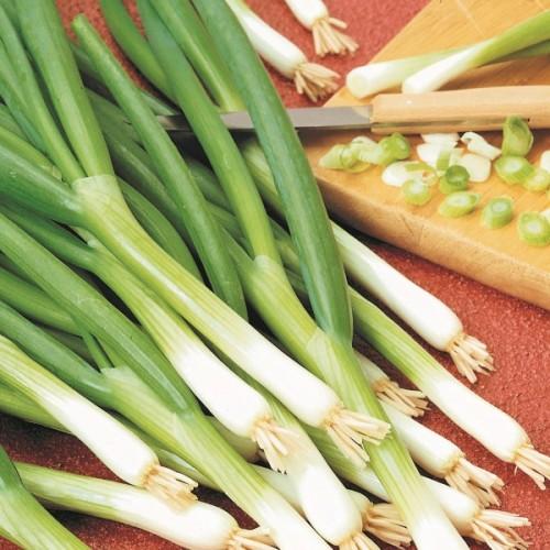Warrior Onion