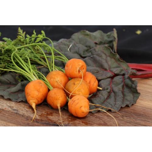 Thumbelina Carrot
