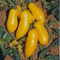 Banana Legs Tomato