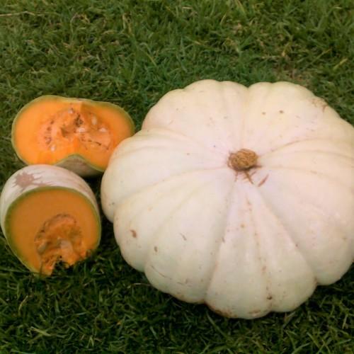 Wit Boer Pumpkin